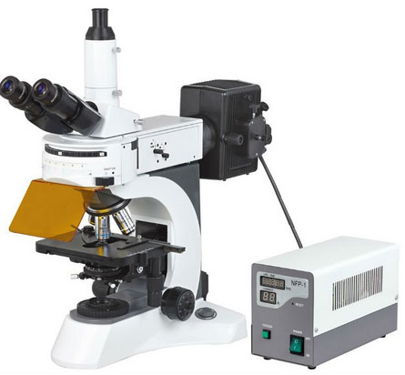 microscope_ms811